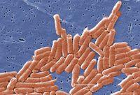 Kwik Trip veggie trays again linked to salmonella