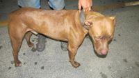 UPDATE: Man talks about finding dog with legs and muzzle taped on highway