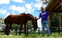 Equine therapy for a healthy mind and heart