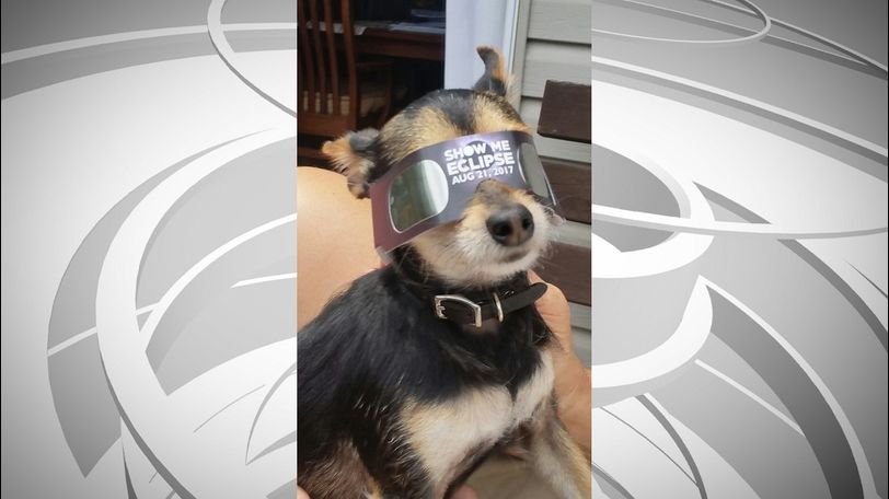 Diana Rowland showed off her dog, Cowboy, wearing eclipse glasses