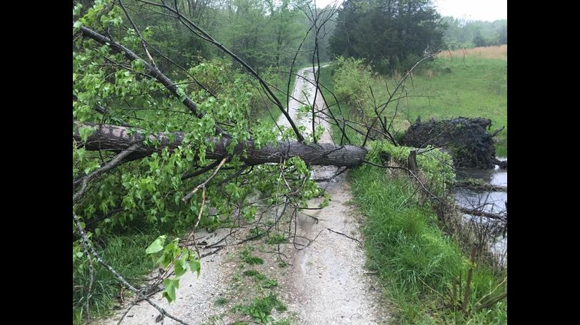 Sarah Peterson sent in this picture of a fallen tree currently blocking the driveway of her Portland home. Peterson wrote,
