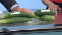 Mareno Cucumber Salad Recipe