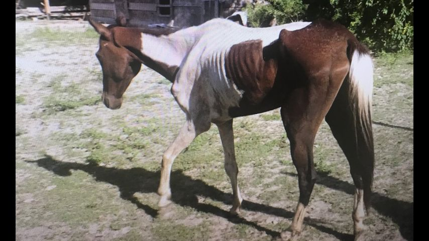 More abused horses being found in East Baton Rouge Parish