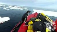 WATCH: Penguin jumps into researchers' boat for a visit
