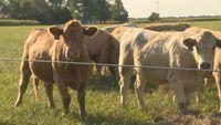 Missouri man pleads guilty in $2.4M cattle fraud scheme case