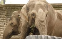Buffalo Zoo's elephants moving to New Orleans