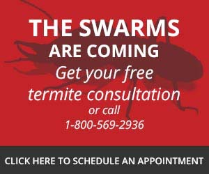 Get your free termite consultation