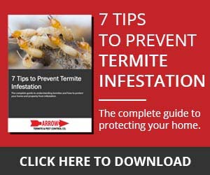 7 Tips to Prevent Termite Infestation