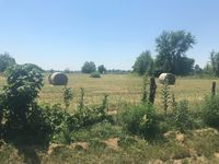 Story image: Cattleman calls Missouri's hay shortage a possible