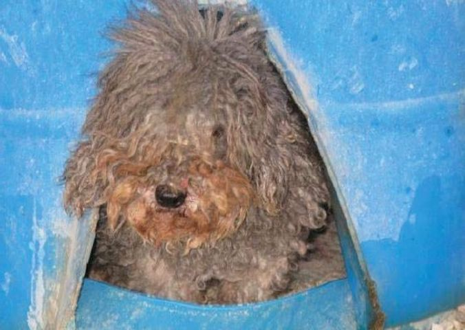 Humane Society reports 30 problem puppy mills in Missouri