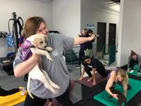 Story image: Puppies invade yoga class to raise money for dog rescue