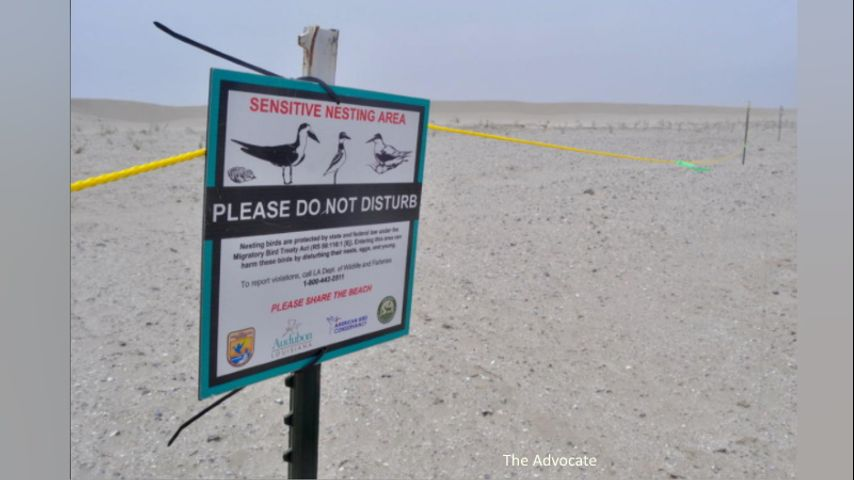 Elmer's Island Wildlife Refuge reopening Friday