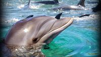 Dolphin, sea turtle deaths on Gulf Coast prompts probe