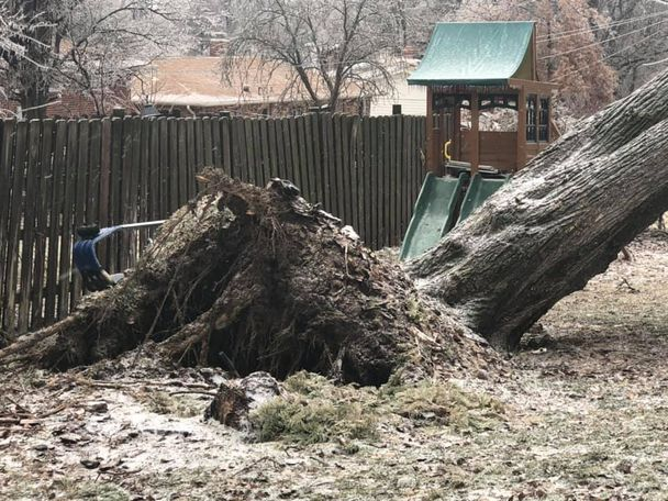 Cindy Stogsdill says said the tree crashed down at 5:30 a.m. She said she is very sad to see it go, because it was the biggest in her yard in Columbia.