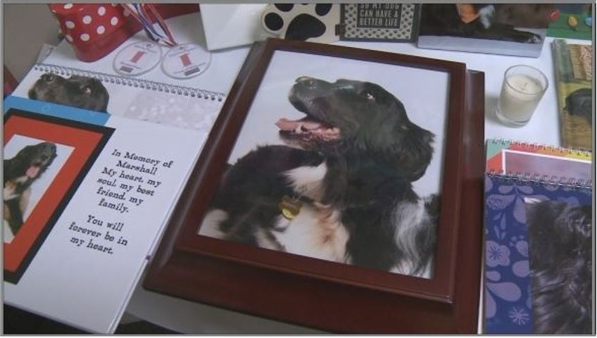 Picture frame that contains the remains of Marshall, Linda Bonebrakes loyal companion.