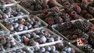 Study shows berries help delay memory loss