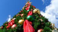 Homeowners relish tree at heart of California Christmas rite