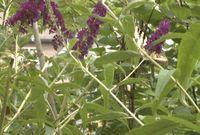 Jefferson City proposes new botanical gardens