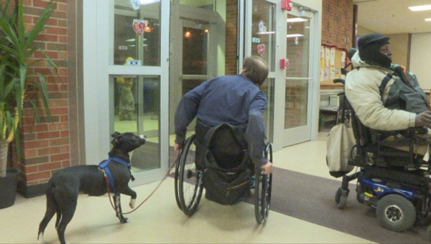 Proposed bill is cracking down on service animal fraud