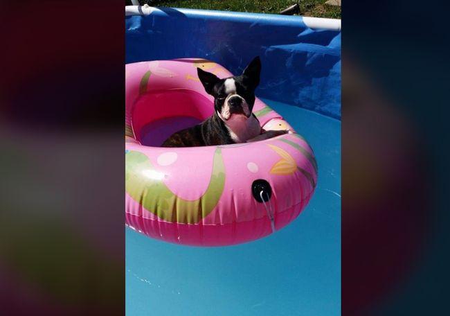 This is Maddie, sunbathing in the pool. - Jena Holstun Ingram