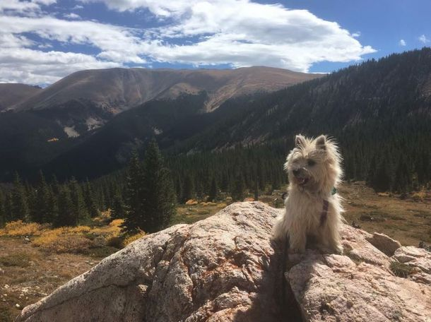 Kirby, hiking in Breckenridge - Jandy Hartman Arnold
