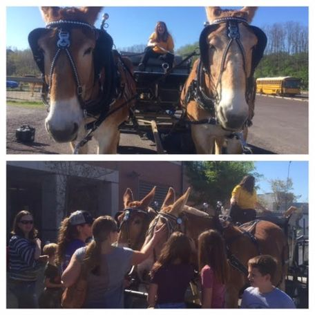 Kate (left) and Molly (right) greeted visitors and gave rides throughout the day.