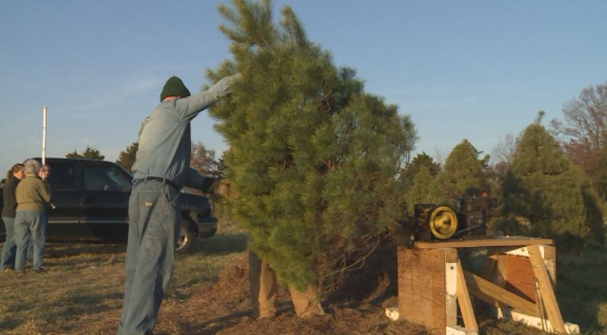 Columbia Farm Offers Personally Cut Christmas Trees