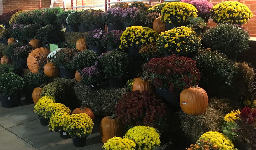 Pumpkins sit outside Hy-Vee off Conley Road in Columbia