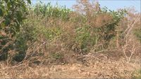 State fire marshal, citing drought, urges no outdoor burning
