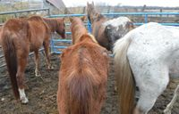 Story image: 12 horses dead, 16 rescued in north Missouri