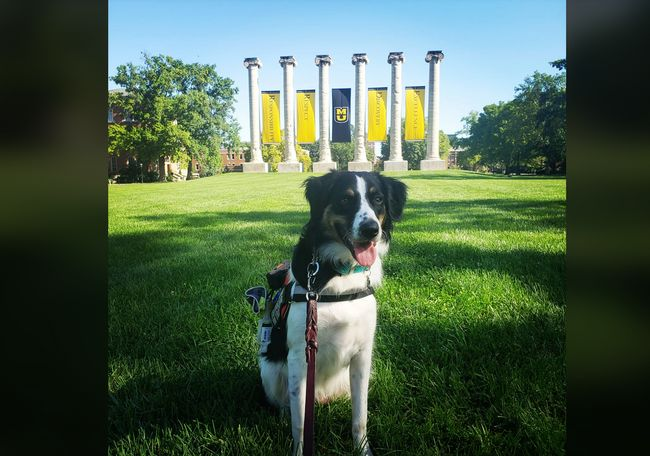 Max, my service dog who misses working on campus! - Kari Lenz Shahin