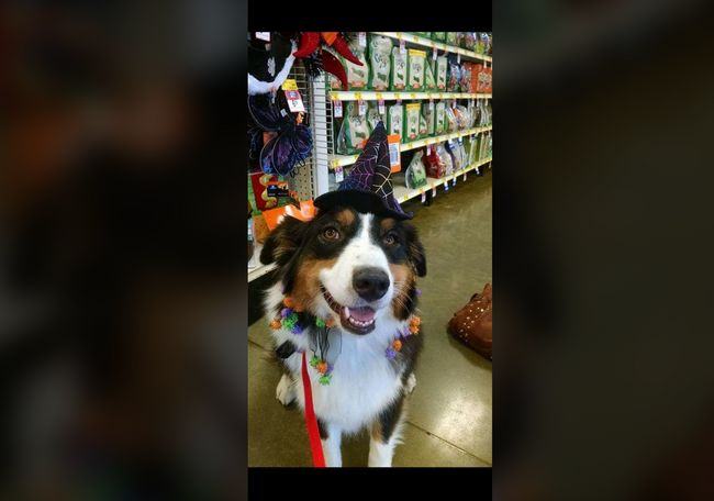 This is my Echo, such a ham. LOVES to go shopping with mom, and even knows the PetSmart sign when we pull up! - Jennifer Scott