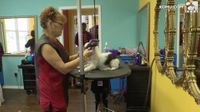 Story image: Dog groomer trains service animals to give back to community