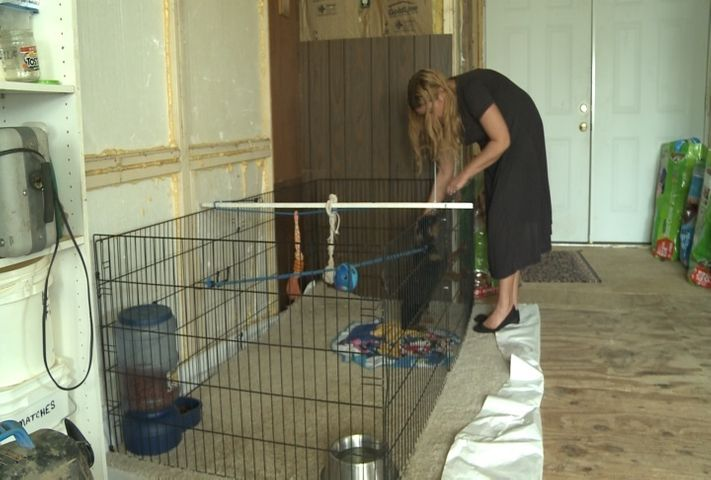 TARGET 8: Complaints against dog breeders released, questions remain