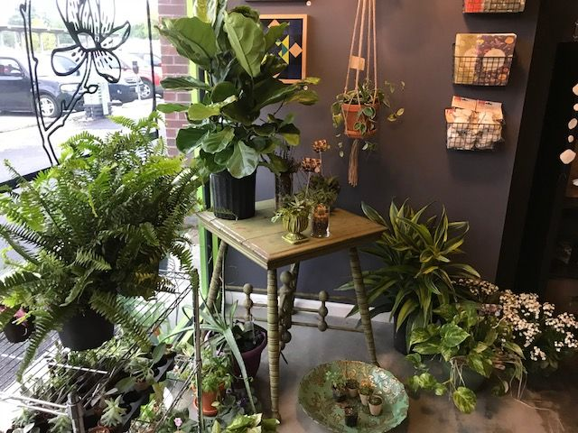 Flower shop hosts help group for house plants