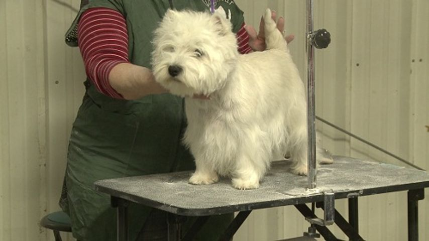 Columbia Kennel Club's Annual Dog Show Kicks Off Saturday