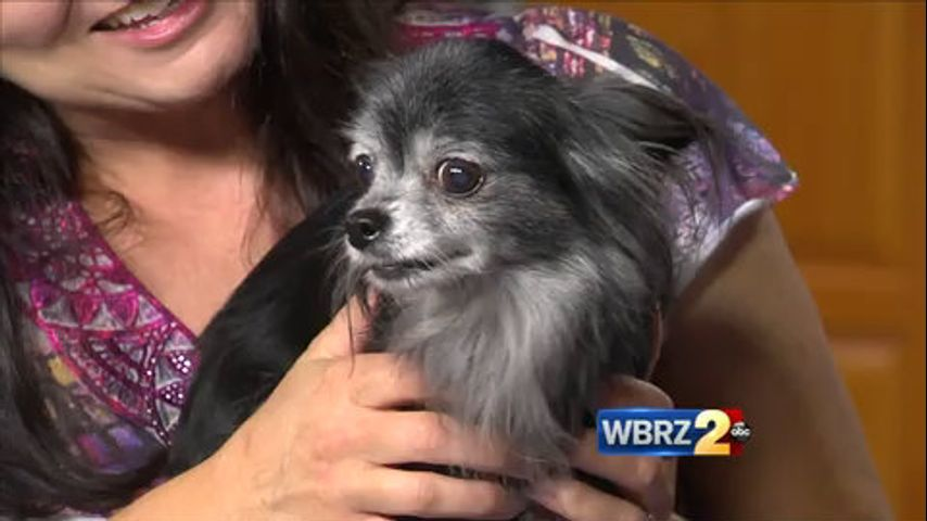 SOS Animal Rescue has more strays up for adoption